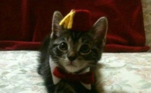 funny-fun-lol-cats-wearing-fez-pics-images-photos-pictures-bajiroo-6