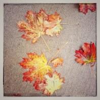 fall16_20
