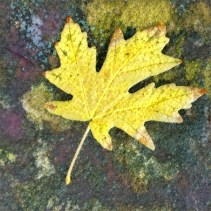 leaves16_07