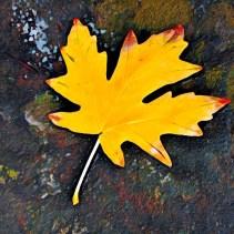 leaves16_09