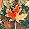 leaves16_16