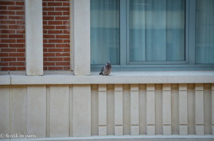 Belgian pigeons seem to be on the much larger size.
