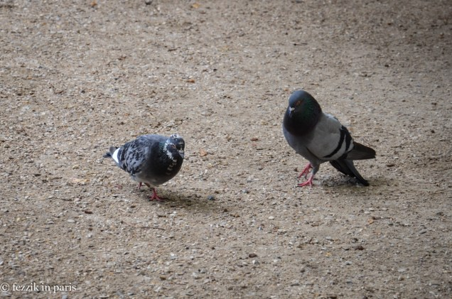 More amorous pigeons.