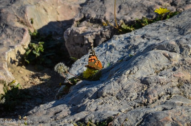 A flutterby.
