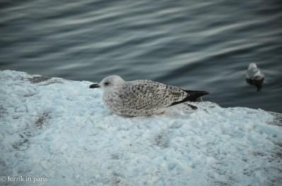 A sad bird in the snow.