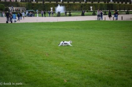 It's a chat de Versailles (it's my damn blog, so no, I'm not leaving).