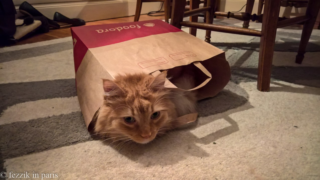 In the news-surprising-to-nobody category, Vorenus prefers delivery. He also needs to stop gnawing on the Purrito's yoga mat (sigh).