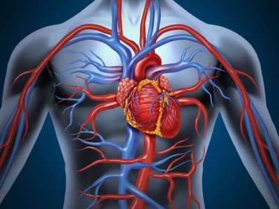 Durcissement des artères, la recherche avance