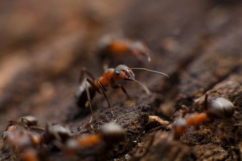 Runaway Powers to Persecuting Civil Society Organizations  –  Using a Hammer to Kill an Ant