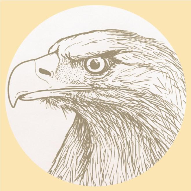 wildlife-eagle-img-1
