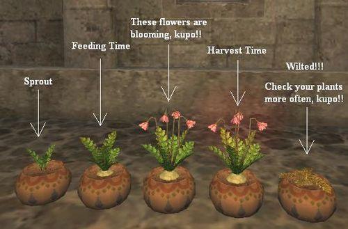 Gardening Gamer Escape