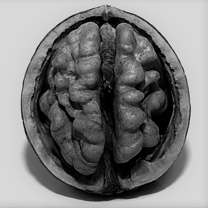 Cerveau- noix