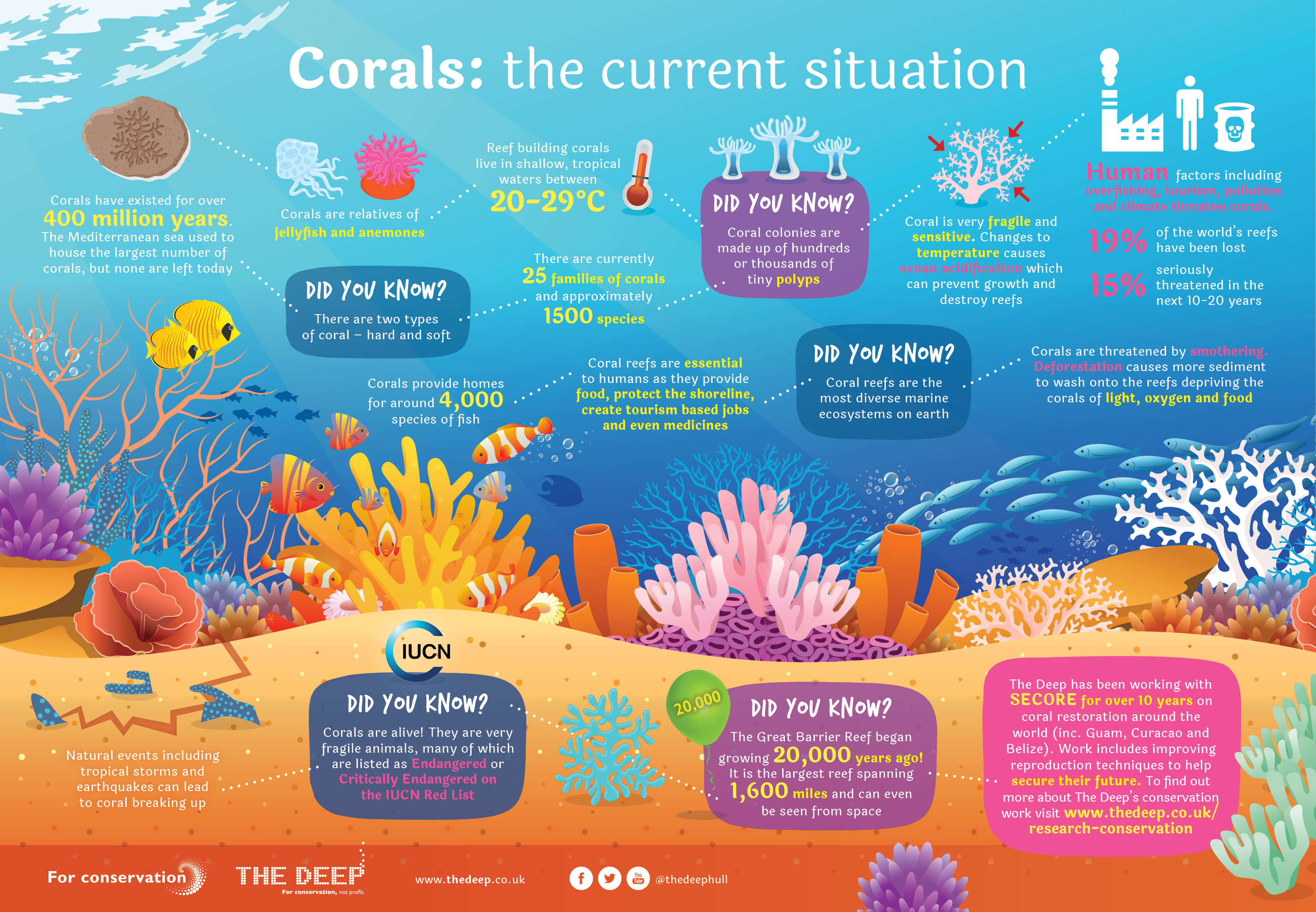5 Amazing Facts About Coral Reefs