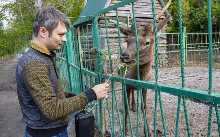 a man feeds a deer