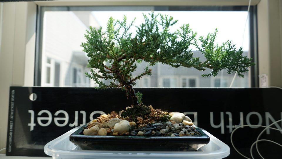 Photo of a juniper bonsai in a bay window.