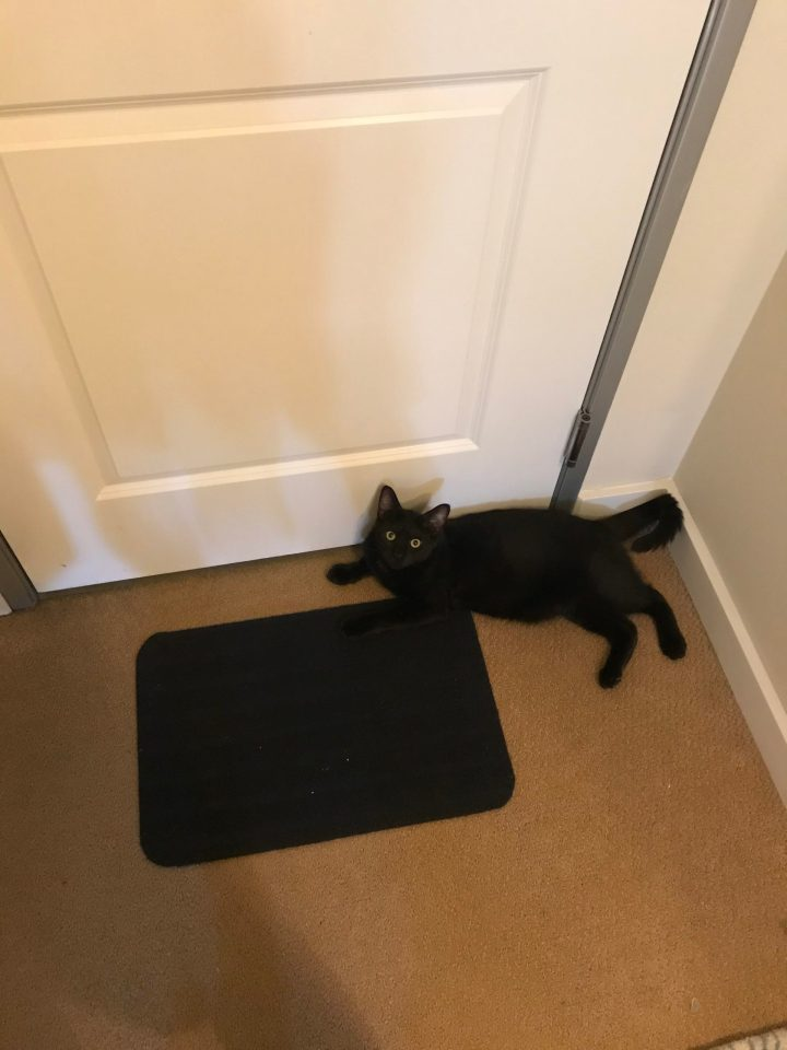 Photo of a black cat laying in front of a white door.