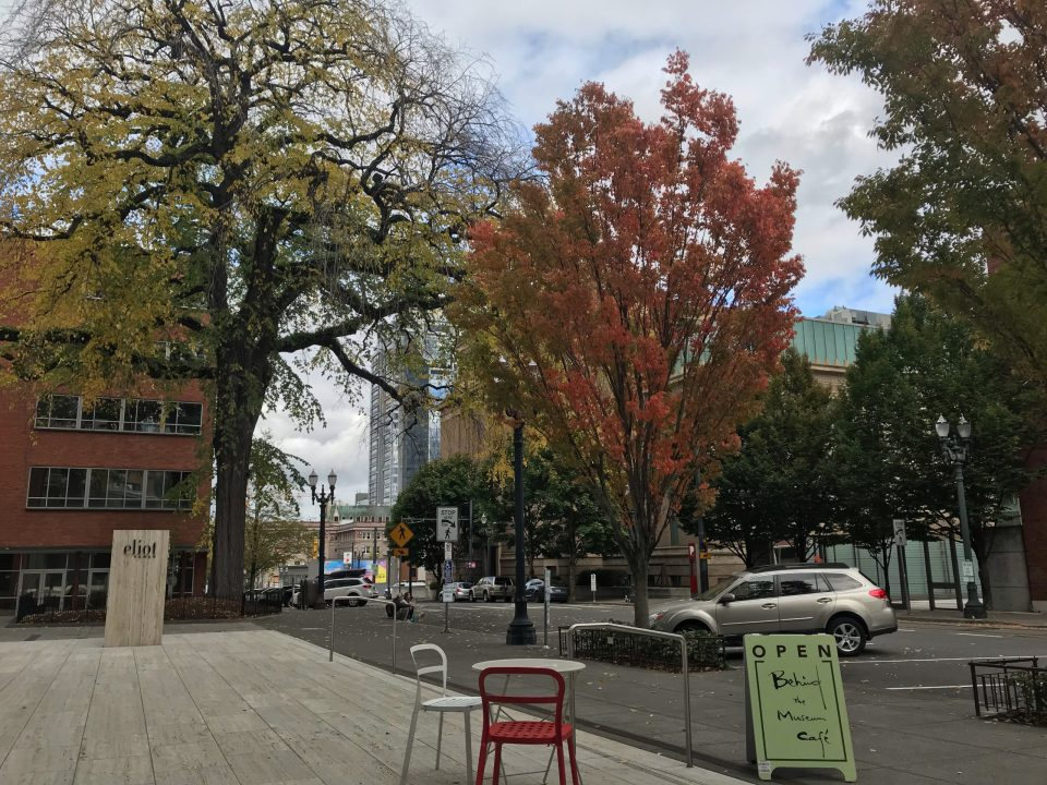 Photo of autumn foliage seen from the Behind the Museum Café patio.