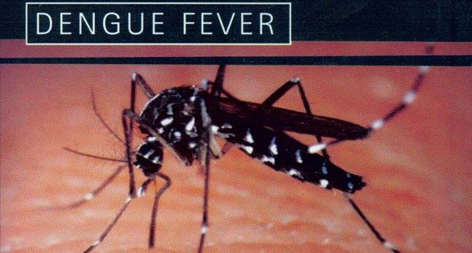 Dengue 'high risk'