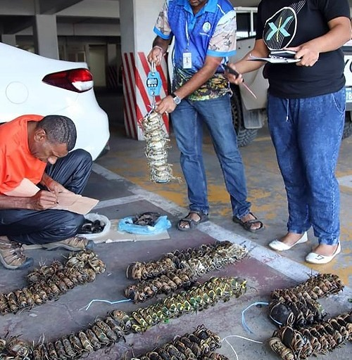 Vendors warned to refrain from selling undersized crabs