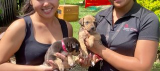 Giving Back to the Community – Donations to Animals Fiji Shelter