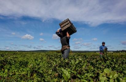 fi2w-farmworkers-3
