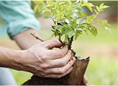 Celebration of Life - Tree Planting Ceremony