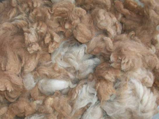 Alpaca fiber for spinning or felting