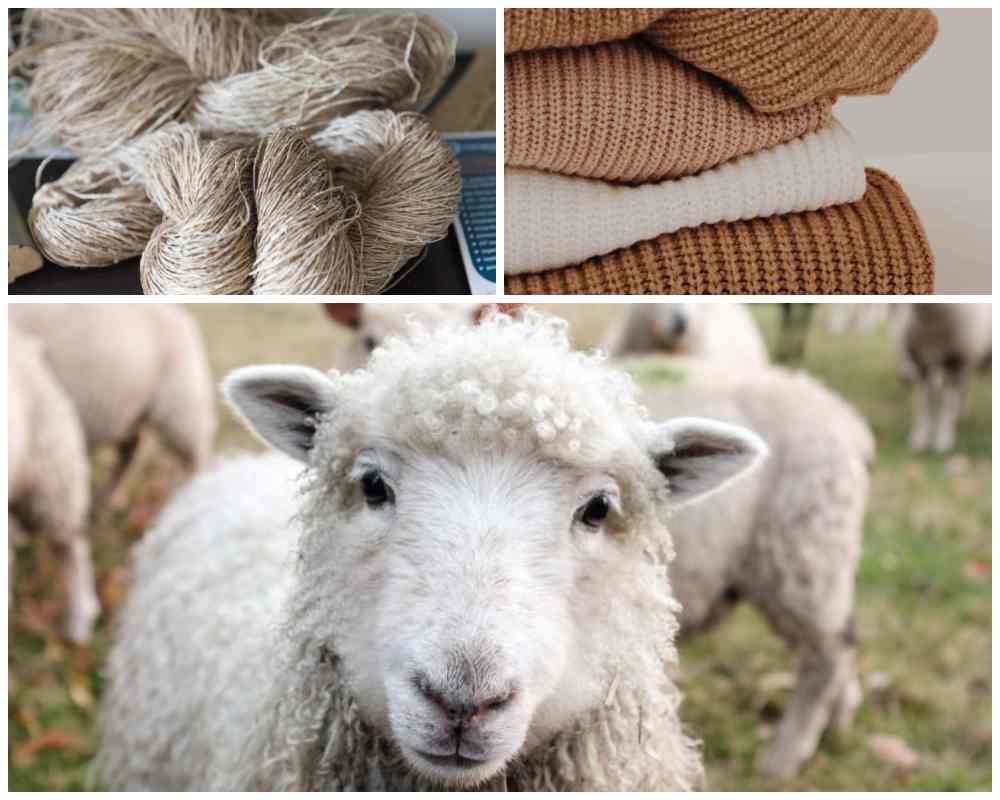 Wool items susceptible to wool or clothes moths