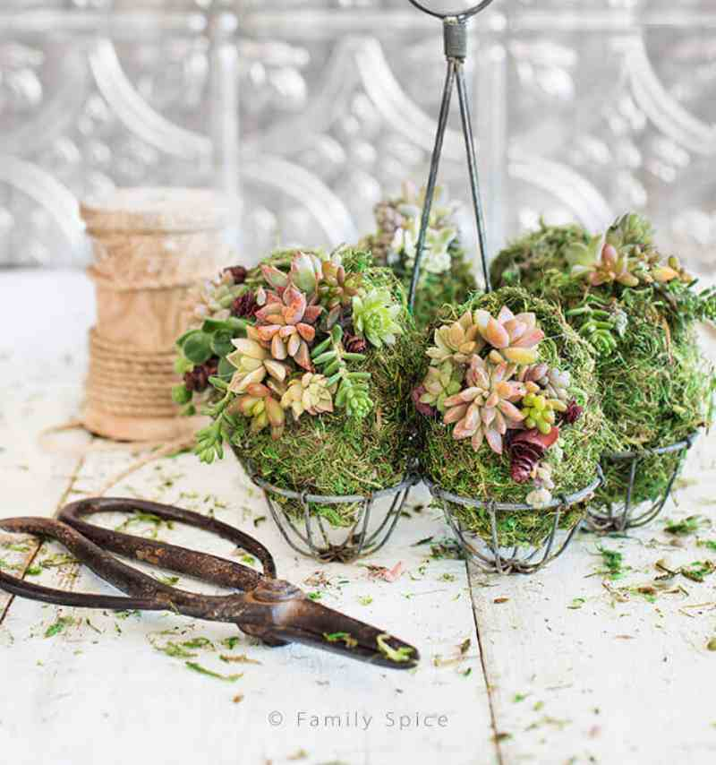 How to make Succulent and Moss Decorated Easter Eggs