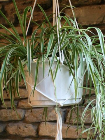 Tutorial for making a macrame plant hanger