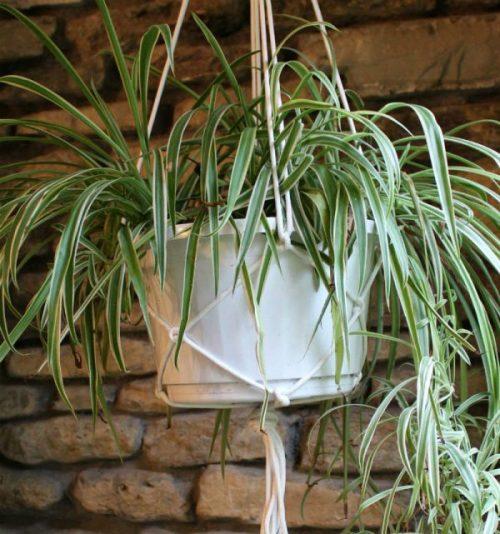 Tutorial for making a macrame plant hanger