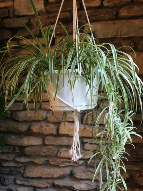 How to make an easy macrame plant hanger