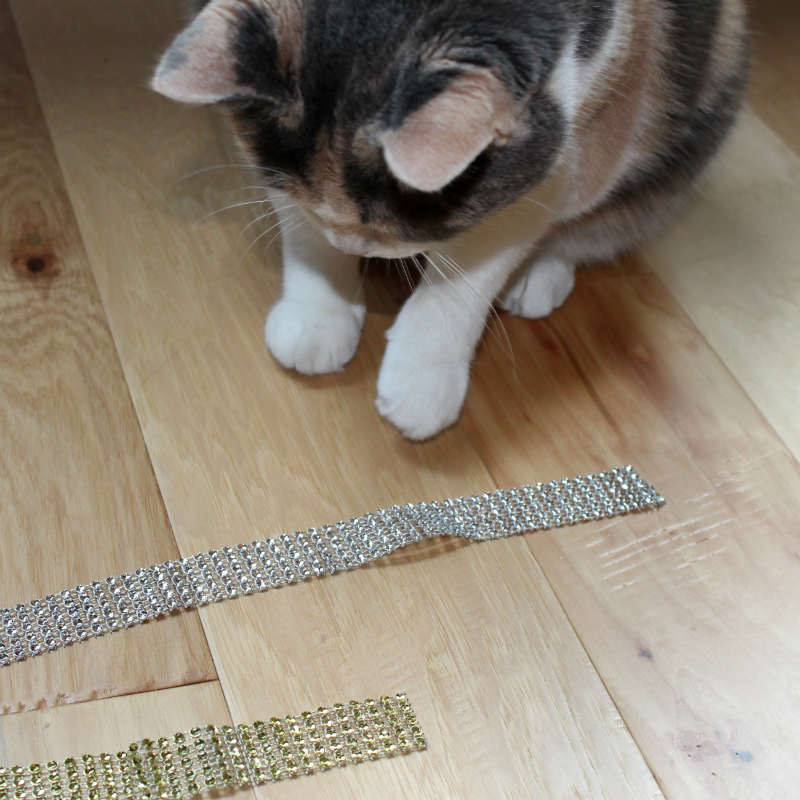 My Kitty inspecting the ribbon I bought for the wine bottle sleeve