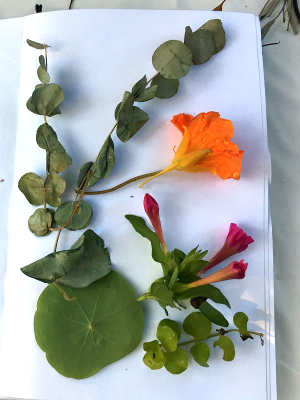 Eucalyptus, Nasturtium bloom and leaf, Four O Clock blooms and leaves laid out to ecoprint