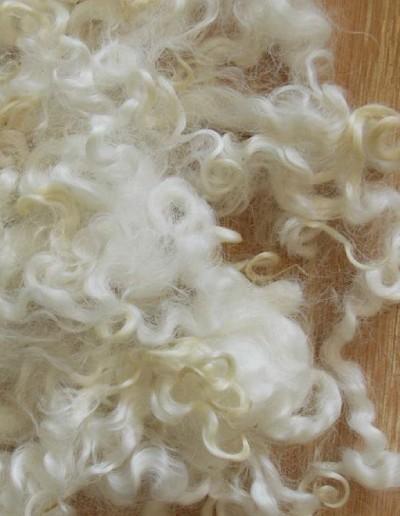 Sheep Wool Locks