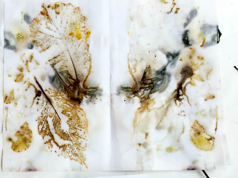 Eco Printed Oak Leaves dipped in liquid copper modifier using a homemade recipe