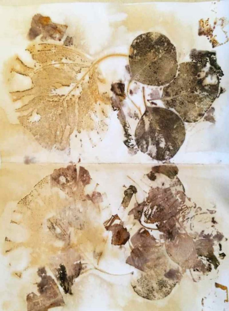 Watercolor Paper Eco Printed with Eucalyptus Leaves, Onion Skins and Liquid Iron