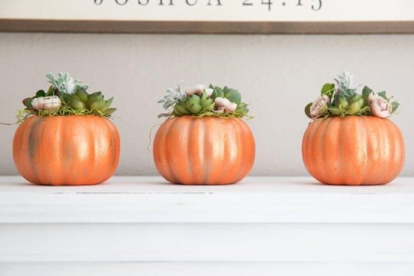 Pumpkins decorated with Succulents