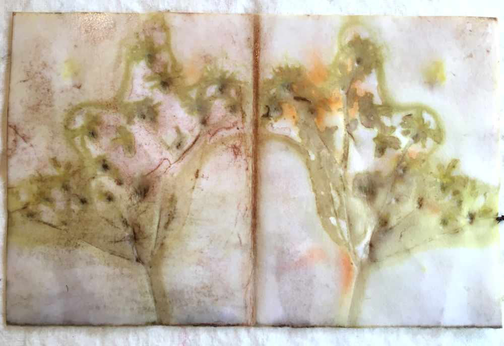 Wildflower Ironweed printed on paper with watercolor paints
