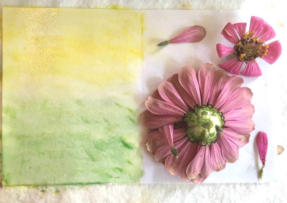 Watercolors and zinnia blooms for ecoprinting