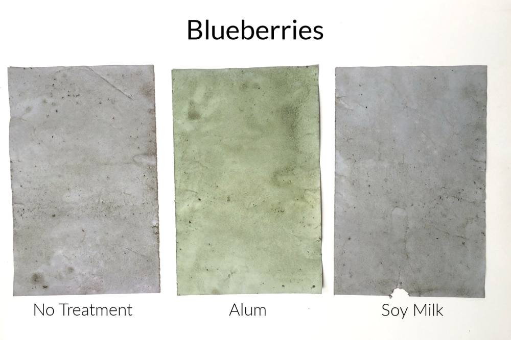 Papers stained with blueberry dye