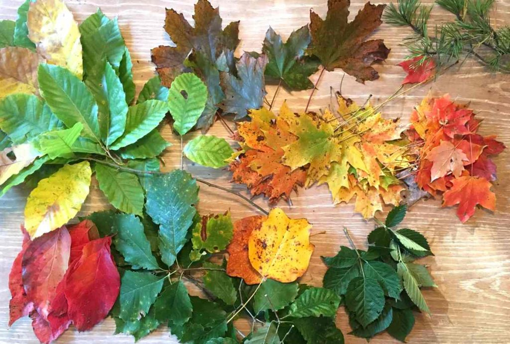 Eco printing tips: use leaves that contain tannins