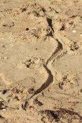 A track on the beach - we were walking with experienced guides.