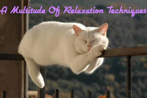 Cat on fence relaxation