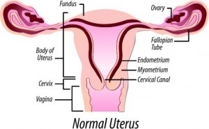 fibroids and uterus