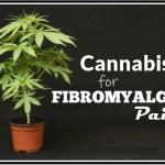 Cannabis for Fibromyalgia