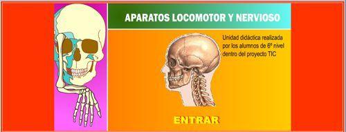 el aparato locomotor y el sistema nervioso