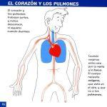 Ficha del corazón y los pulmones para niños