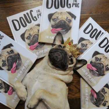 Top 10 Famous Adorable Pets on Instagram :Forth on will Really Win Your Heart