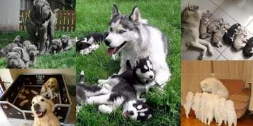 cute mommy dog pets